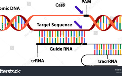 Scientists Performed First Ever CRISPR-CAS9 based In-vivo Therapy