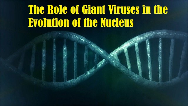 The Latest Study Could Reveal the Role of Giant Viruses in the Evolution of the Nucleus