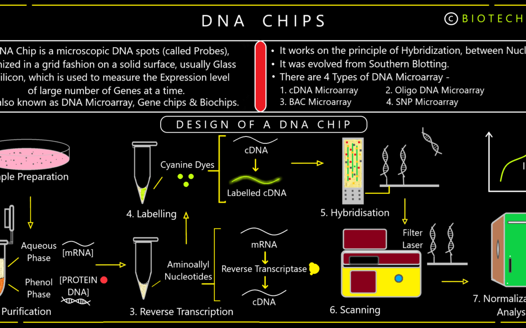 DNA Chips: An Infographics