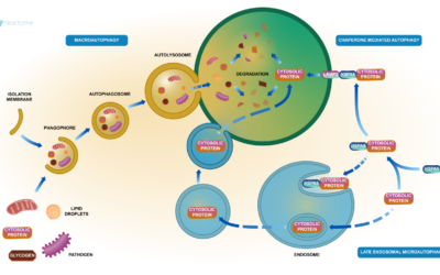 Autophagy in Embryonic Stem Cells could be the key to Regenerative Medicine