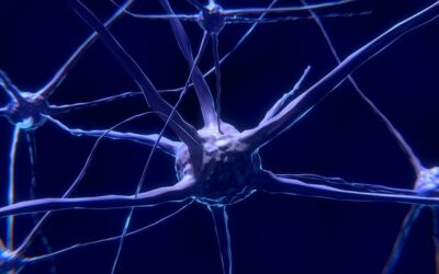 The Brain protects its Neurons against Viruses: Latest Study Reveals